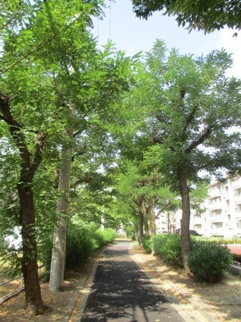 団地の周囲を遊歩道があります 季節を感じながらお散歩はいかがですか